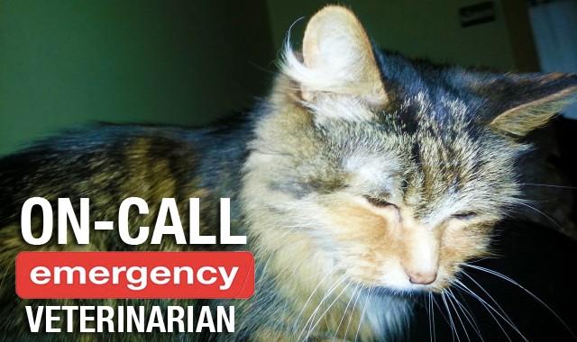 On Call Emergency Veterinarian, Comox Valley